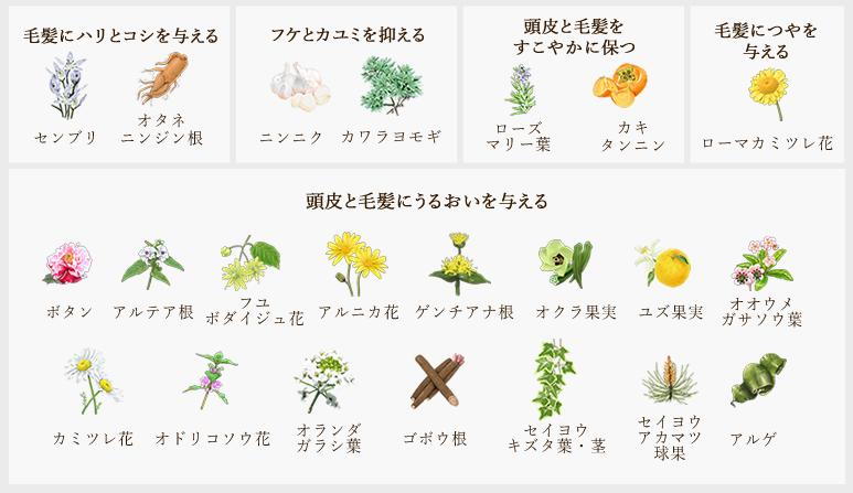きわび植物エキス成分
